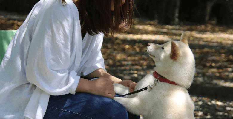 愛犬も母も亡くし孤独で立ち直れない(30代 女性 会社員)